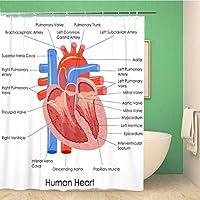 浴室のシャワーカーテン図の解剖学人間の心臓の解剖学体筋肉器官ポリエステル生地フック付き防水バスカーテンセット 165X180 CM