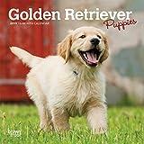 「Golden Retriever Puppies 2019 Calendar」のサムネイル画像