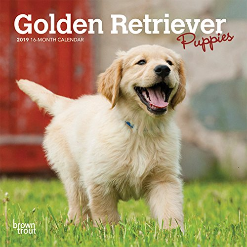 『Golden Retriever Puppies 2019 Calendar』のトップ画像