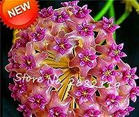 15:保谷種子、鉢植えの花盆栽植物100粒/パック保谷種子ランの種子Diyホームガーデン