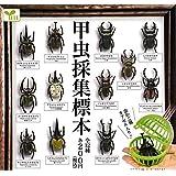甲虫採集標本 [全12種セット(フルコンプ)]