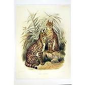C1990 ほ乳類のネコ属のサーバルのネコ科の色刷