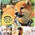 日めくりワンコ!2022年(卓上日めくりカレンダー犬版)