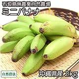 【2019年1月4日より順次発送予定】ミニバナナ 2kg 自然農法 (沖縄県 石垣島無農薬自然農場) 産地直送