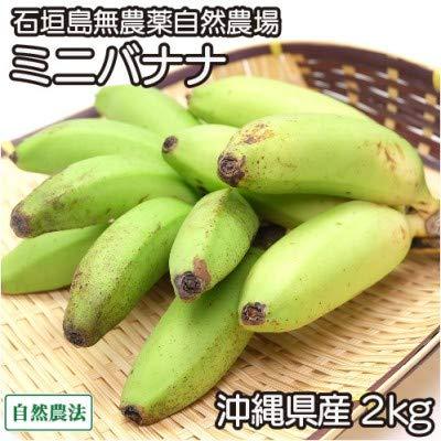 ミニバナナ 2kg 自然農法 (沖縄県 石垣島無農薬自然農場) 産地直送 ふるさと21