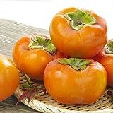 和歌山産 富有柿 約7.5kg 1箱 ご家庭用