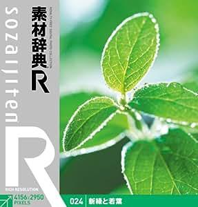素材辞典[R(アール)] 024 新緑と若葉