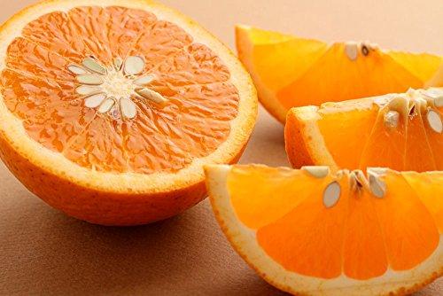紀州田舎の小さな八百屋さん【訳あり 家庭用】和歌山産 ジューシー清見オレンジ 2.5kg