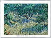 ポスター フィンセント ファン ゴッホ Olive Orchard 1889 額装品 アルミ製ベーシックフレーム(シルバー)