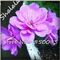 2:さまざまな色ゼラニウムの種子多年生の花の種子ペラルゴニウムPeltatumの種子屋内部屋の植物100ピースホームガーデン植物