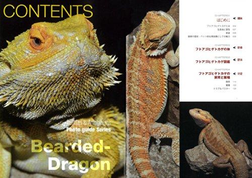 フトアゴヒゲトカゲ (見て楽しめる爬虫類・両生類フォトガイドシリーズ)