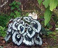 混合色100ピースベゴニアの種、鉢植えの花の種、ガーデン温室のためのベゴニアの植物、バラエティ完全、出芽率95%