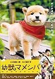 劇場版 幼獣マメシバ[DVD]