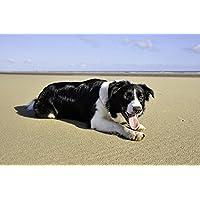 黒と白の犬の動物 - #32188 - キャンバス印刷アートポスター 写真 部屋インテリア絵画 ポスター 90cmx60cm