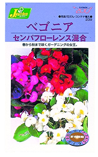 カネコ種苗 草花タネ239 ベコニア センパフローレンス ミックス 10袋セット