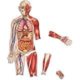 Learning Resources Double-Sided Magnetic Human Body (LER6044) [並行輸入品]