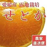 せとか 大トロ柑橘 みかん 愛媛産 訳あり 4kg