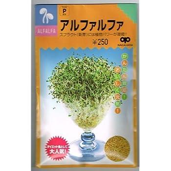 スプラウト種子 アルファルファ 中原採種場のスプラウト種子です