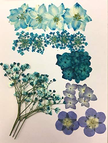 【お花屋さんの押し花セット ブルーMix】