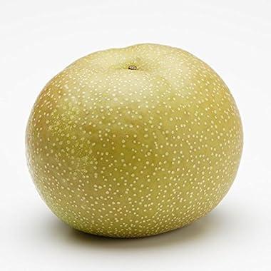 長野 産地直送 訳あり 味極み 葉とらず 梨 豊水 減農薬 5k