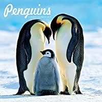 2019 ペンギンウォールカレンダー 鳥 Carousel Calendars