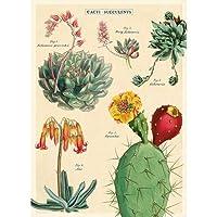 Cavallini Cacti&Succulents 2ラッピングペーパー