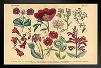 壁掛け 絵画 - ヨーロッパとアメリカ - 赤いエキゾチックな花ビクトリア朝の植物図 - 39x31cm(額縁を送る)