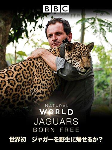 世界初 ジャガーを野生に帰せるか (吹替版)