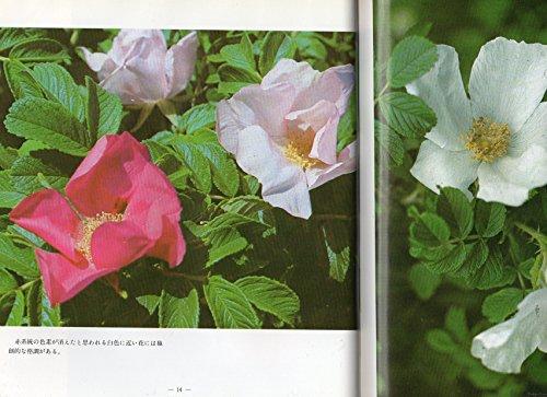 花・ハマナスの花—写真集 (1979年)