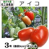 ミニトマト 苗 アイコ 9cmポット (接ぎ木)