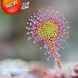 損失プロモーション!モウセンゴケPeltata種子鉢植え植物円形モウセンゴケ食虫植物園の種子100粒/パック、#7N2C53