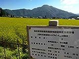 低農薬 有機肥料栽培 コシヒカリ 白米 福井県産 29年産 5kg【生産者直送】