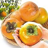 国華園 福岡産 太秋 約4kg1箱 柿