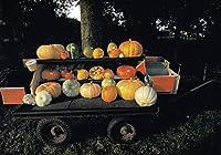 ART UNLIMITED ハロウィン ポストカード (かぼちゃ×荷車) C9570