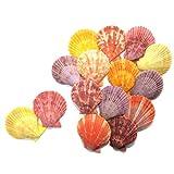 【エデンの貝殻】海の贈り物 虹色 ホタテ (ヒオウギガイ) 各色ランダム組合せ 15枚セット 縦4.5-5.5cm 横4.0-5.0cm[S-01]