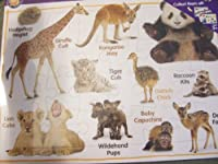 "A+ Wild Animal Babies 24 Piece Learning Puzzle (11"" x 14"") By Dalmatian Press [並行輸入品]"