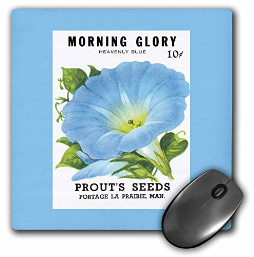 3drose LLC 8 x 8 x 0.25インチマウスパッド、Morning Glory Heavenly Blue Sprouts Seeds Portage La Prairie ( MP _ 170191 _ 1 )
