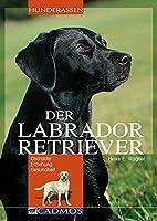 Labrador Retriever: Charakter Erziehung Gesundheit