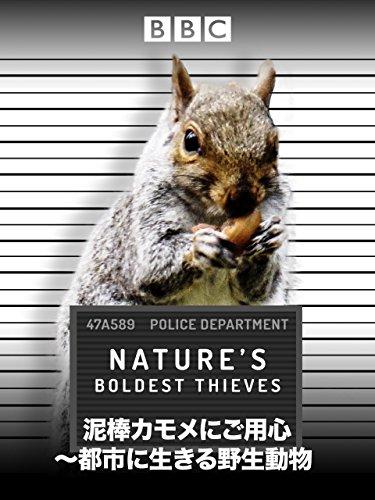泥棒カモメにご用心~都市に生きる野生動物 (吹替版)