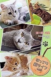ほっこり猫ライフ vol.9