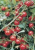 【SEED】Heirloom Tomato® Wild Cherry トマト・ワイルド・チェリー (10seeds) *原種系&原種トマト