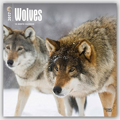 Wolves 2017 Calendar (Square Wall)