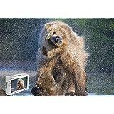 300ピース ジグソーパズル - クマ 水洗い ナショナルジオグラフィック 木製素材 20.6×15.1インチ