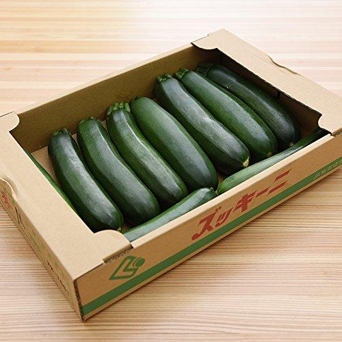 九州産 (熊本) ズッキーニ 1ケース 10本 生 新鮮 産地直送