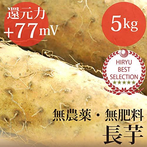 長芋 5kg 自然栽培(無農薬・無肥料)