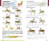 鳴く虫ハンドブック—コオロギ・キリギリスの仲間 画像