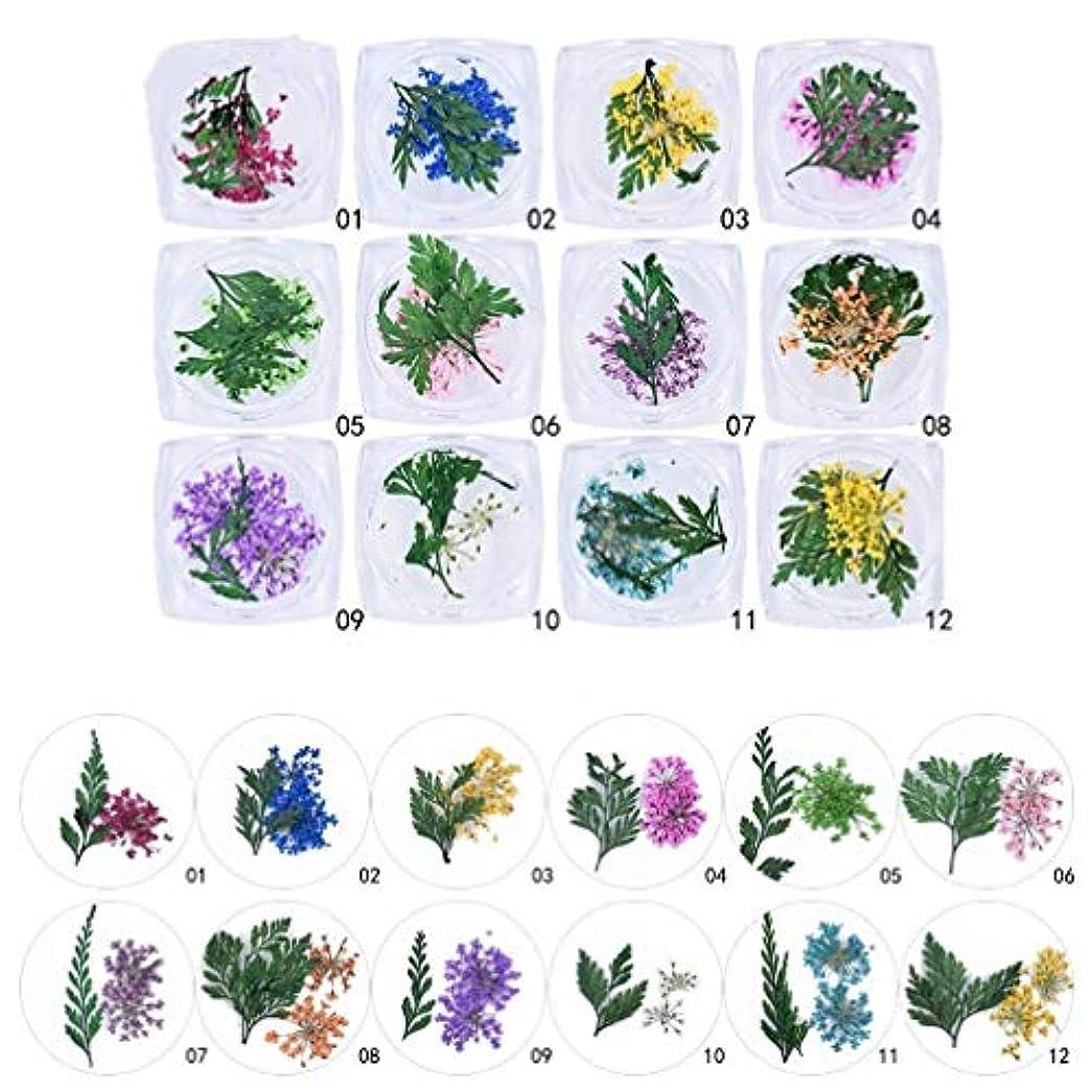 Flymylion 押し花 ドライフラワー 葉 ネイル パーツ レジン レジンアートやネイル素材に 専用ケー プロの ス入りアク 素材 DIY ネイルパーツ 12色