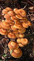 Pie de madera enfundado - semilla