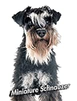 Miniature Schnauzer: Composition Book 150 pages 8.5 x 11 in. | College Ruled | Writing Notebook | Lined Paper | Soft Cover | Plain Journal