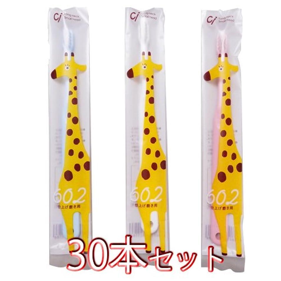 貫通する縮れた材料Ciメディカル 歯ブラシ Ci602 仕上げ磨き用 30本入